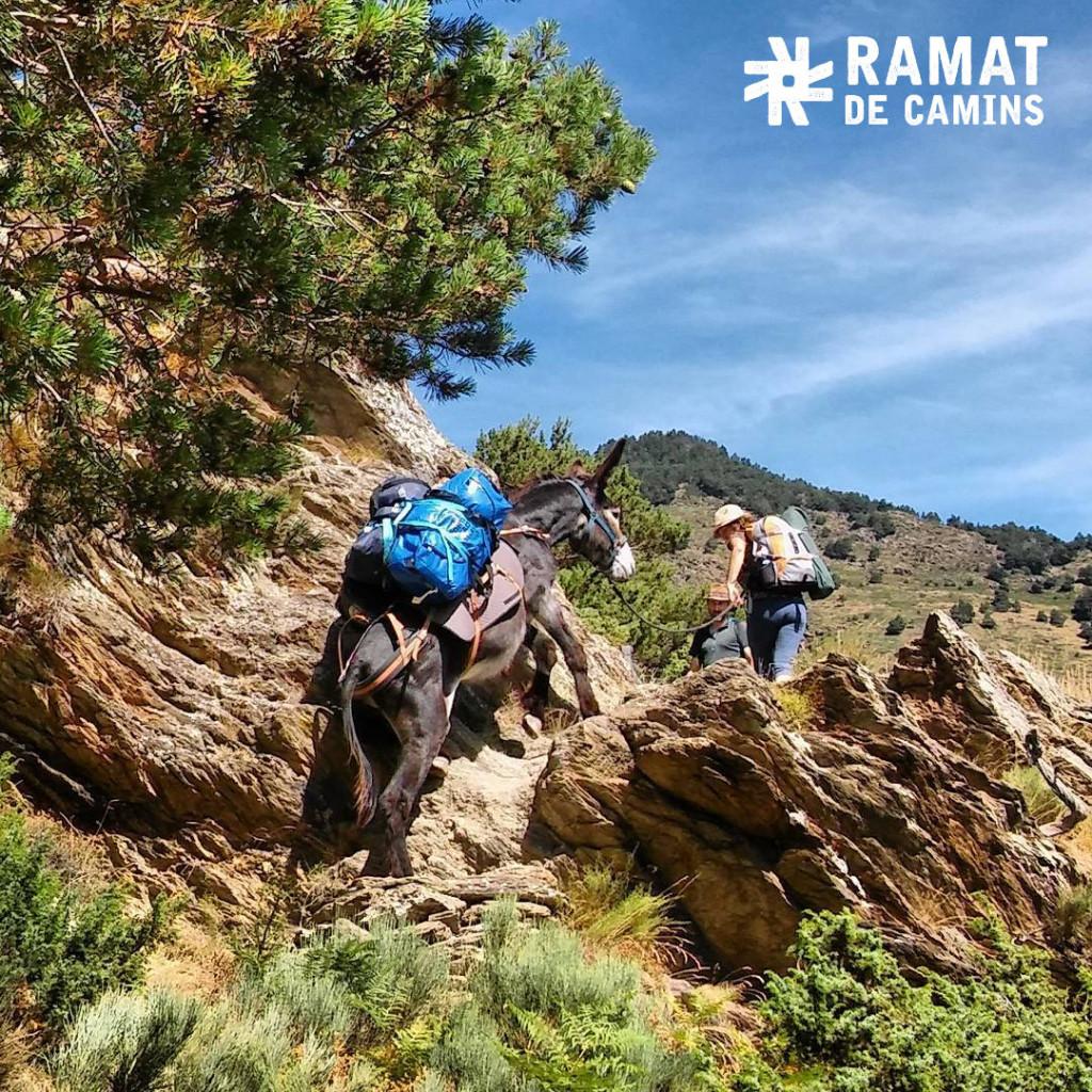 #RamatdeTraginers 3ª fotografia més votada